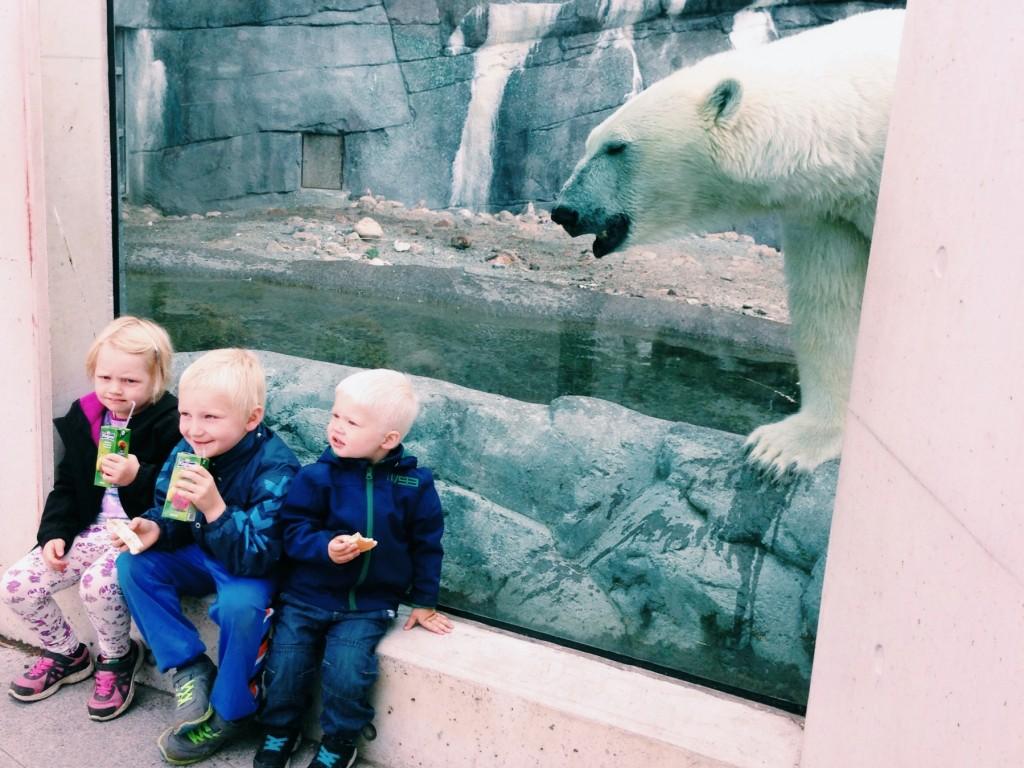 動物園のシロクマゾーンにて